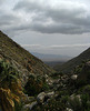 On the trail to Maidenhair Falls in Anza-Borrego (1649)