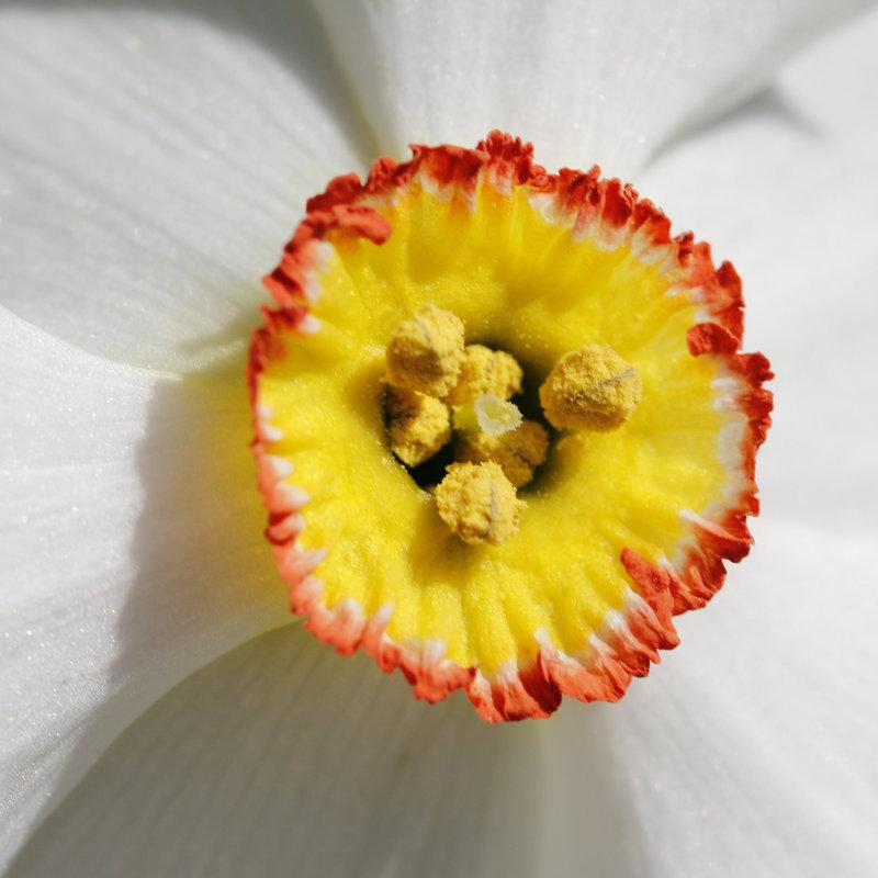 Une fleur par jour.... - Page 4 10339625.3c4908ca.800