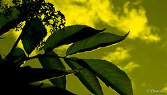 Le vert de l'espérance !