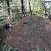 Ameisenhaufen - fourmilière  - anthill