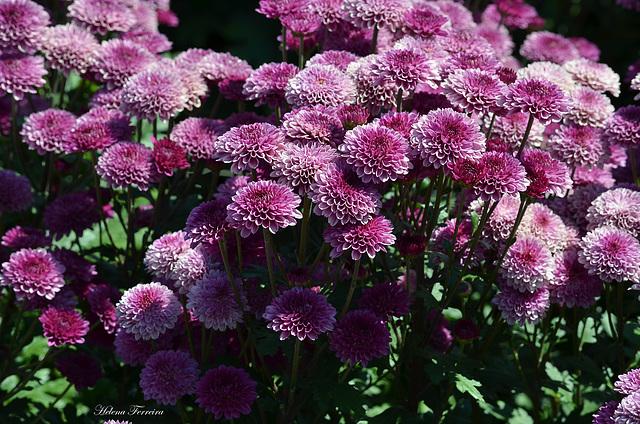 ~ Floral ~
