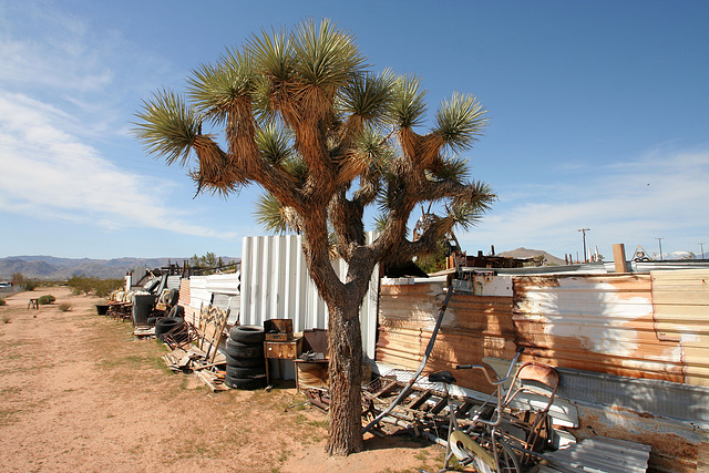 Noah Purifoy Outdoor Desert Art Museum (9918)