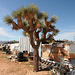 Noah Purifoy Outdoor Desert Art Museum (9918)