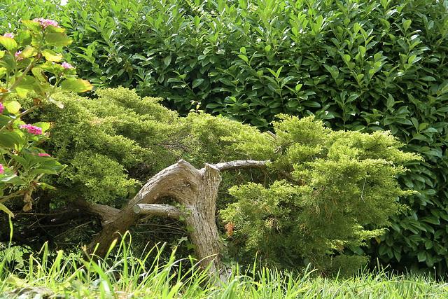 Arbuste verdoyant.