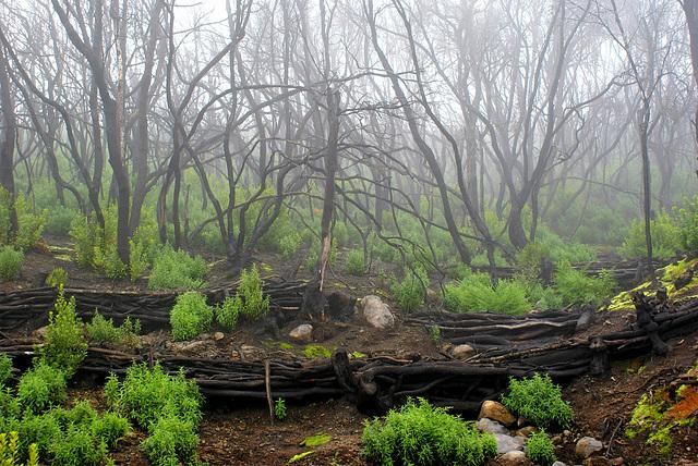 Nach den Bränden im August 2012 beginnt die Natur mit der Regeneration. ©UdoSm
