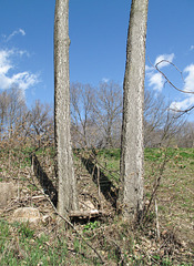 Skinny-legged tree pair.