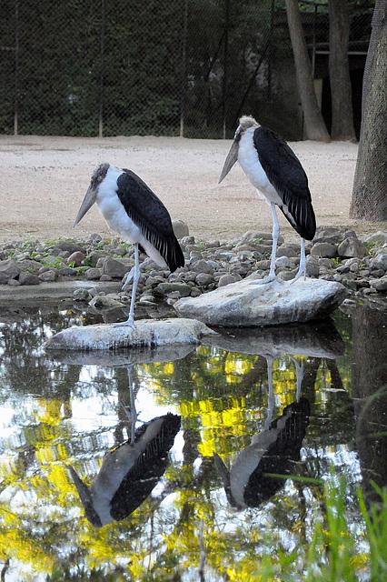 Vier Vögel