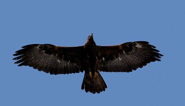 Der Herr der Lüfte fliegt über unsere Köpfe hinweg