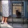 El Bosque_the cat