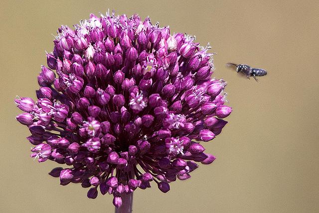 20110530 4478RTfw Lauch, Insekt [Camargue]