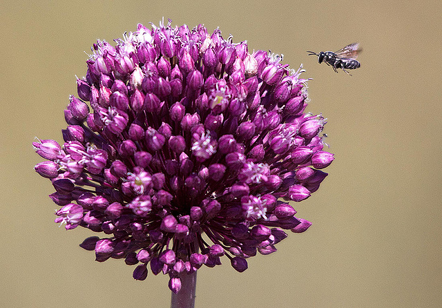 20110530 4477RTw [F] Lauch, Insekt, Parc Ornithologique [Camargue]