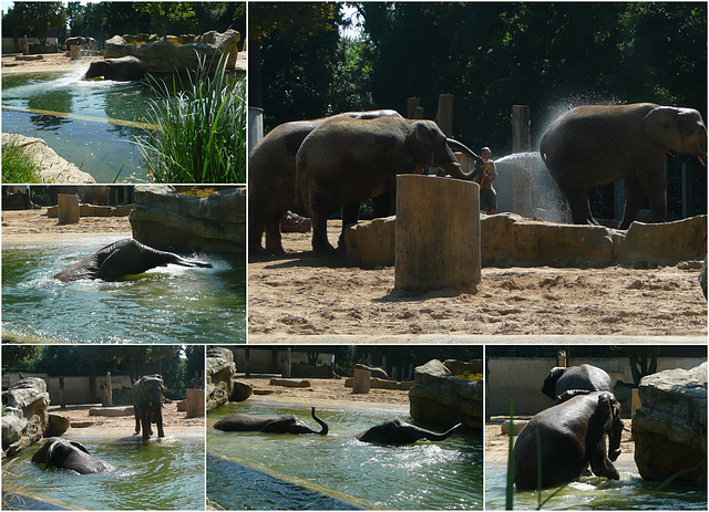 Zoo Dresden - Bad der Elefanten - Elefantbano