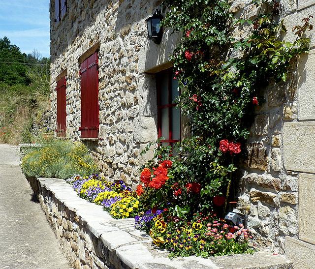 Belle floraison devant une belle façade