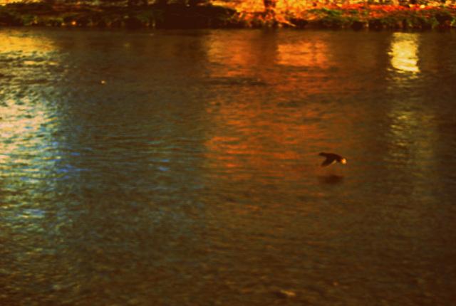 Si je suis une rivière, c'est pour y porter ta barque.