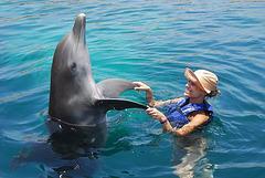 Mi hija y su delfin