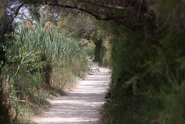 20110530 4372RTw [F] Der Weg, Parc Ornithologique [Camargue]