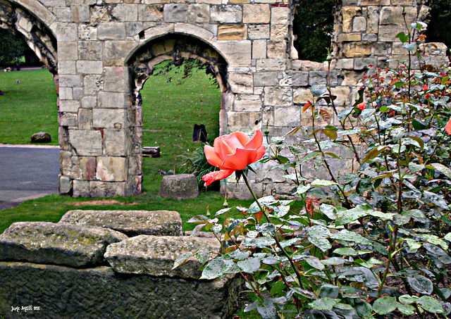 Ruins of St Mary's Abbey, York