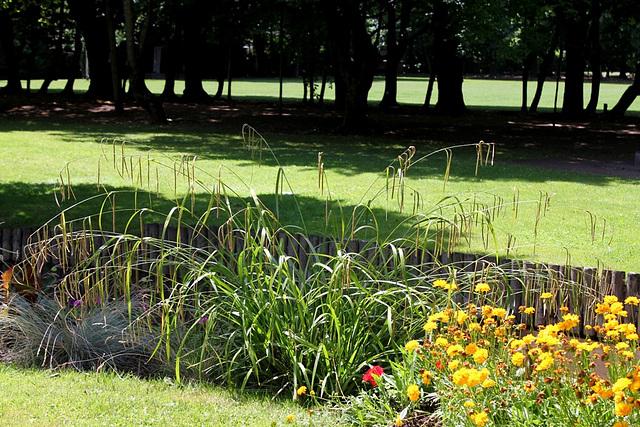 Carex pendula - Parc de Cébazat