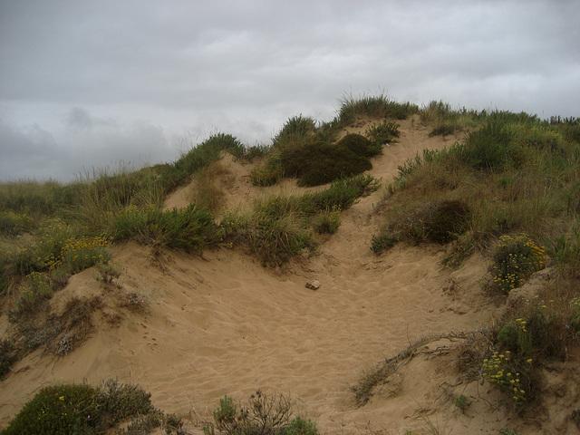 Dune (4)