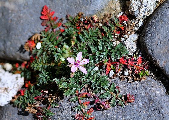 flore des chemins, bords de routes, talus et voies de communication 10812038.e88225be.560