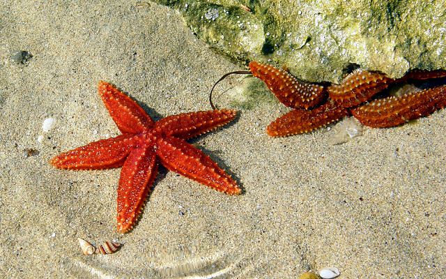 Rock pool stars play hide and seek