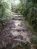 Wanderweg durch den Regenwald...