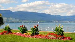 Le lac de Neuchâtel