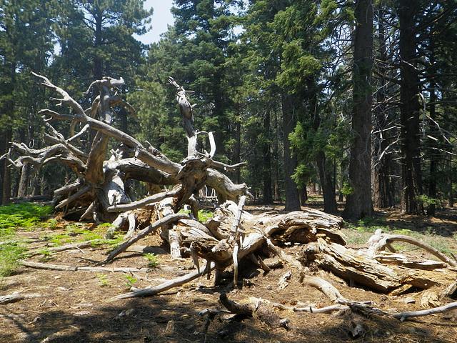 Dead Tree (0049)