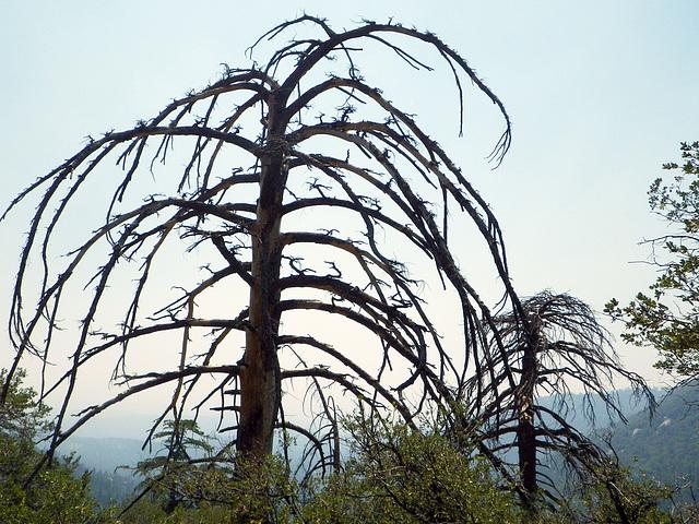 Dead Trees (0066)