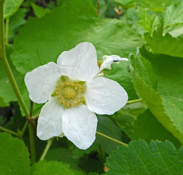 Flower (0060)