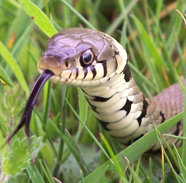 Adamo estis en la paradizo, sed tiam venis la serpento...