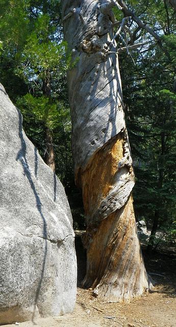 Spiraled Tree (0069)