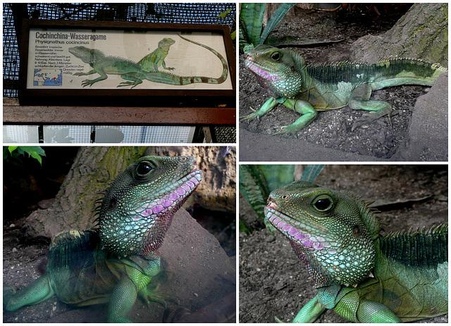 Zoo Dresden - Wasseragame