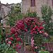 20110531 4773RWw [F] Navacelles [Cirque de Navacelles]