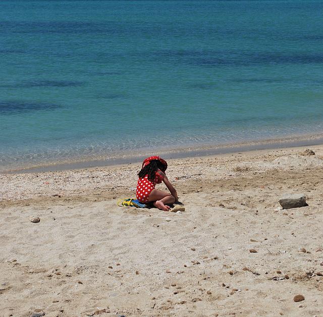 Coccinelle des sables