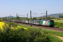 Duo vert-bleu en Bourgogne