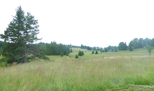 tipa montara herbejo en Novburga montaro