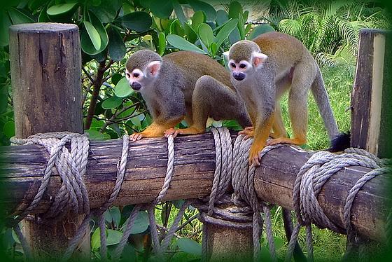 im Gondwanaland gesichtet