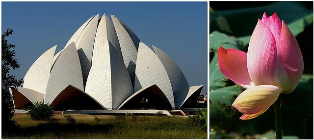 Lotus Tempel | Lotos Blüte