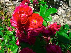 Fouillis de fleurs