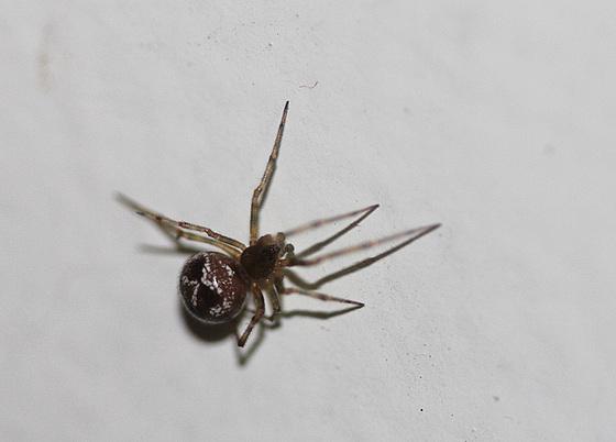 les 8 pattes - araignées et compagnie 10765348.87cb682e.560