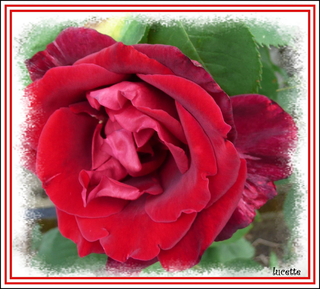 ** ROUGE PASSION  **