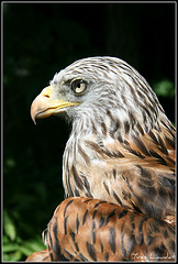 2011 Zoo Garenne 7076