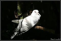 2011 Zoo Garenne 7107