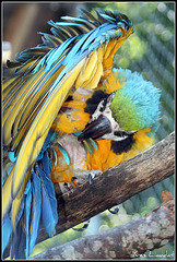 2011 Zoo Garenne 7142