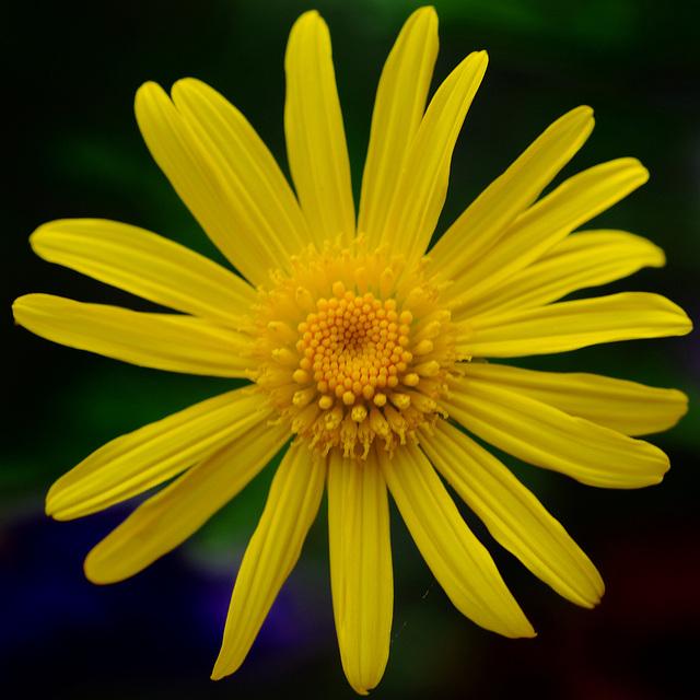 Une fleur...?