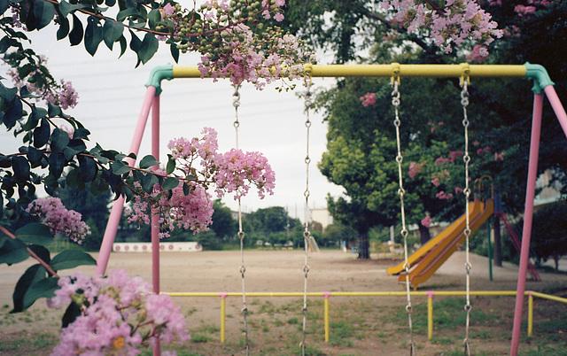 School ground in summer vacation
