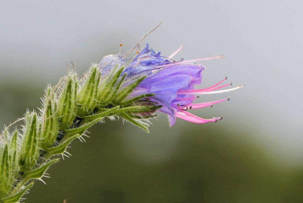 Une fleur par jour.... - Page 2 11026713.6c41cd0d.1024