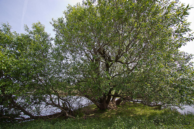 20110506 1894RWw [D-PB] Baum
