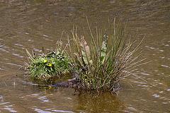20110506 1874RTw [D-PB] Steinhorster Becken, Naturschutz